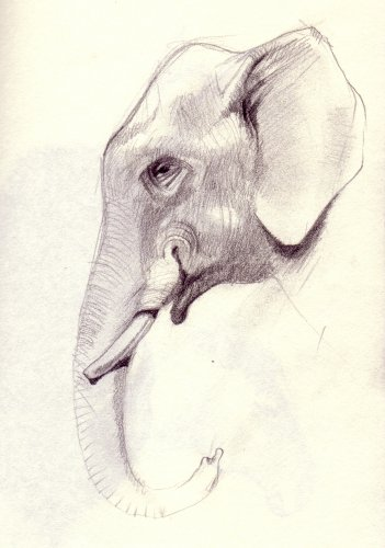 user_img-tTRu2uB8xB_Elephant004.jpg
